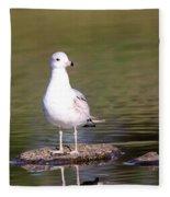 Gull - Don't Get Wet Feet Fleece Blanket