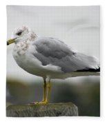 Gullwatch Fleece Blanket