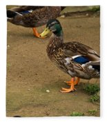 Handsome Mallard Fleece Blanket