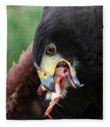 Harris Hawk Feeding Fleece Blanket