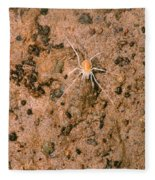 Harvestman Crosbyella Sp. In Cave Fleece Blanket