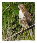 Hawk At A Wedding Fleece Blanket