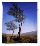 Hawthorn Trees In Sally Gap, County Fleece Blanket