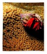 Hermit Crab On Coral Fleece Blanket