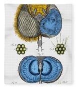 Historical Illustration Of Honey Bee Eye Fleece Blanket