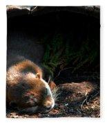 Hit The Otter Snooze Fleece Blanket