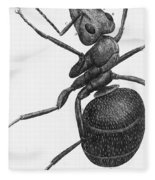 Hooke: Ant, 1665 Fleece Blanket