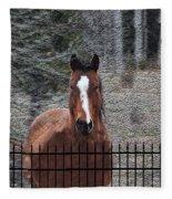 Horse Behind The Fence Fleece Blanket