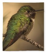 Humming Bird On Branch Fleece Blanket