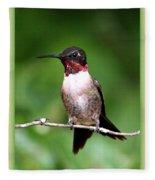 Hummingbird - Male - Will Soon Be Grown Fleece Blanket