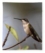 Hummingbird - Ruby-throated Hummingbird - Near The End Fleece Blanket