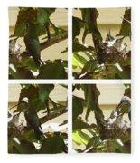 Hummingbird Mother Feeding Her Two Babies Fleece Blanket