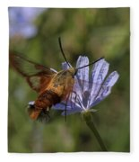 Hummingbird Or Clearwing Moth Din137 Fleece Blanket