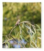 Hummingbird Resting In The Willow Fleece Blanket