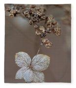 Hydrangea Arborescens Dry Flower Head In Winter Fleece Blanket
