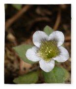 Hyoscyamus Flower Fleece Blanket