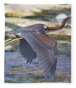 Immature Tricolored Heron Flying Fleece Blanket
