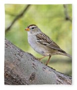 Immature White-crowned Sparrow  Fleece Blanket