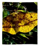 Imperial Moth Din053 Fleece Blanket