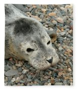 Injured Harbor Seal Fleece Blanket