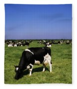 Ireland Friesian Cattle Fleece Blanket