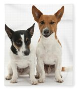 Jack Russell Terrier Dog, Rockie Fleece Blanket