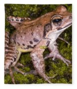 Japanese Ranid Frog Fleece Blanket