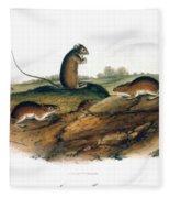 Jumping Mouse, 1846 Fleece Blanket