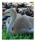 Juvenile Sandhill Crane At Rest Fleece Blanket
