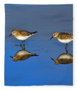 Juvenile White-rumped Sandpipers Fleece Blanket