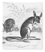 Kangaroo Rat Fleece Blanket