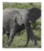Kenya Masai Mara Charging Elephant  Fleece Blanket