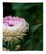 King Rose Strawflower Fleece Blanket