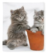 Kittens In Pot Fleece Blanket