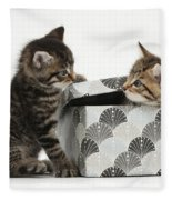 Kittens Playing With Box Fleece Blanket