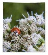 Ladybug Atop The Flowers Fleece Blanket