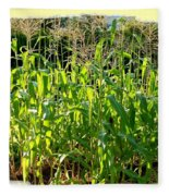 Lake Country Corn Fleece Blanket