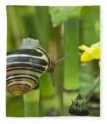 Land Snail 5698 Fleece Blanket