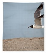 Laughing Gull In Flight Fleece Blanket