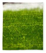 Leaf Stomata, Lm Fleece Blanket