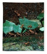 Leafcutter Ants Fleece Blanket