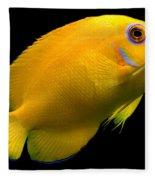 Lemonpeel Angelfish Fleece Blanket