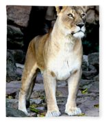 Lioness At Attention Fleece Blanket