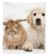 Lionhead-cross Rabbit And Golden Fleece Blanket