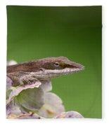 Little Komodo Fleece Blanket