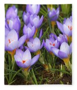 Little Purple Crocuses Fleece Blanket