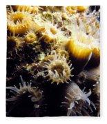 Live Coral Feeding At Night Fleece Blanket