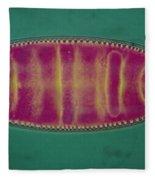 Lm Of An Alga, Surirela Sp Fleece Blanket