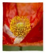 Longhorned Grasshopper Nymph On Orange Poppy Fleece Blanket