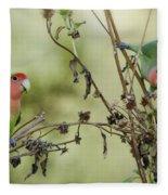 Lovebirds At Play  Fleece Blanket
